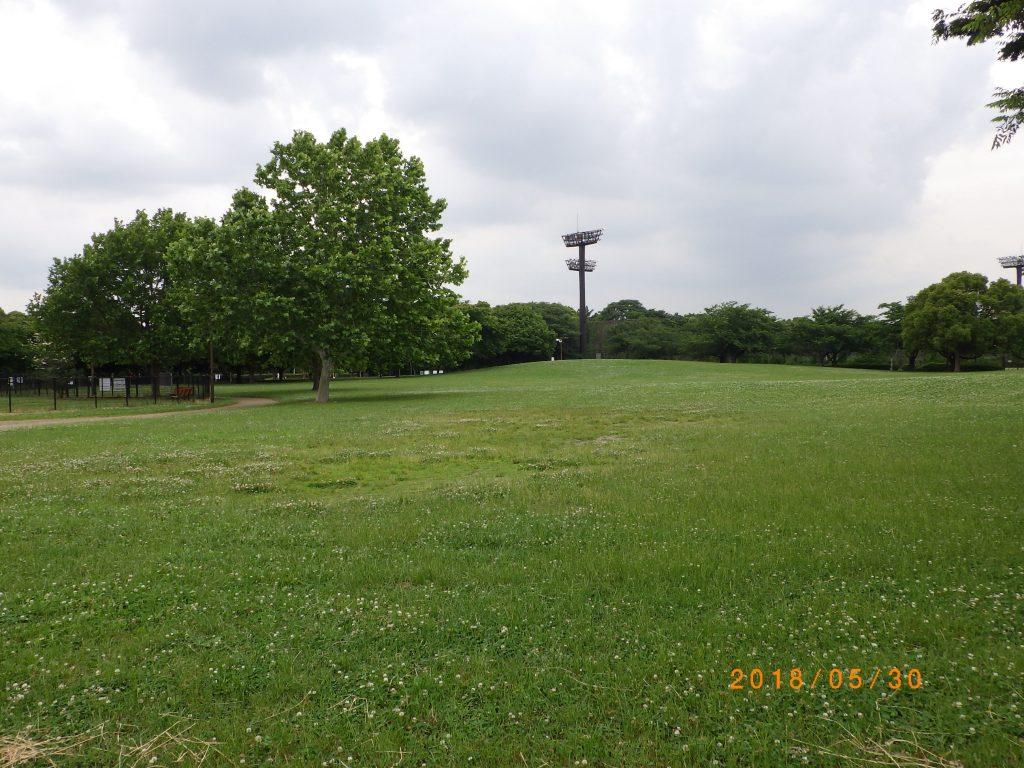 クスノキ広場 (1)