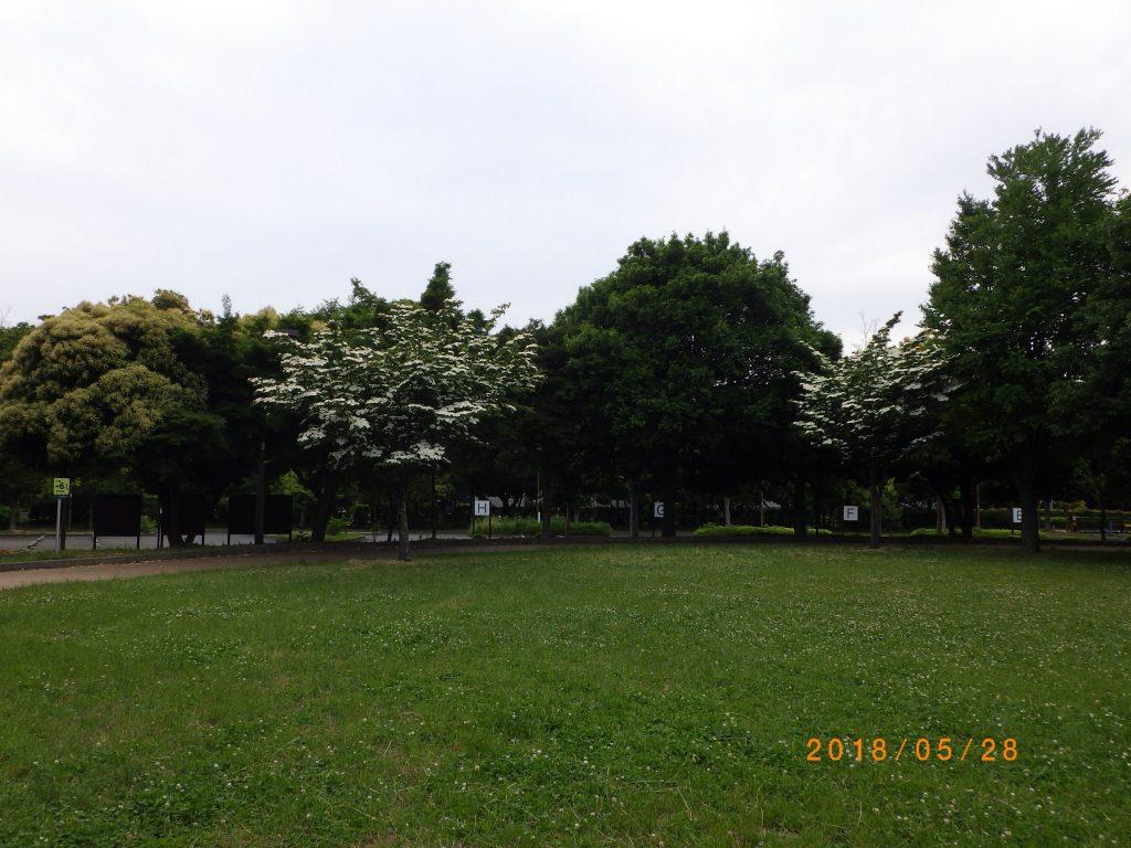 クスノキ広場