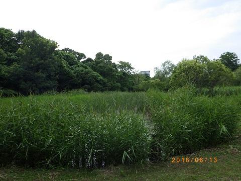 せせらぎ自然池